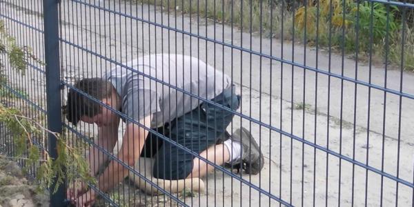 Zaun aus Polen montage - Ampanelde