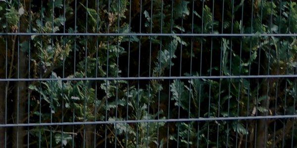 Wie einen Zaun günstig kaufen 3 - Ampanel.de