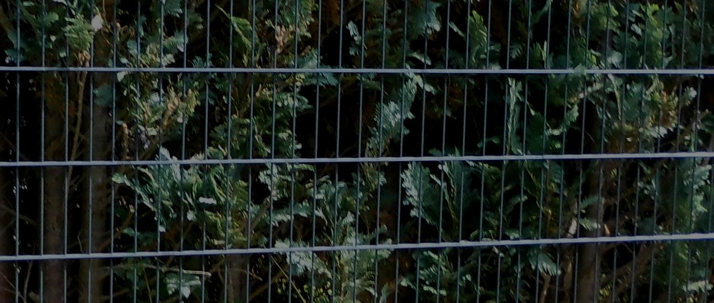 Wie Einen Zaun Gunstig Kaufen Artikel Bei Ampanel