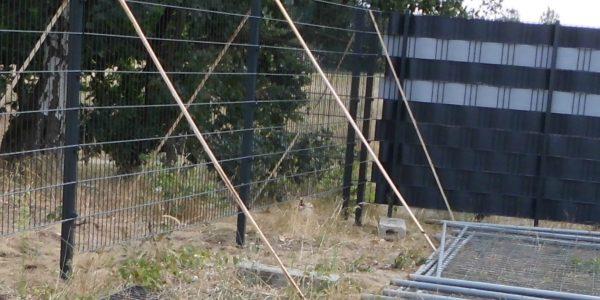 Zaunmontage Kosten - Ampanel.de