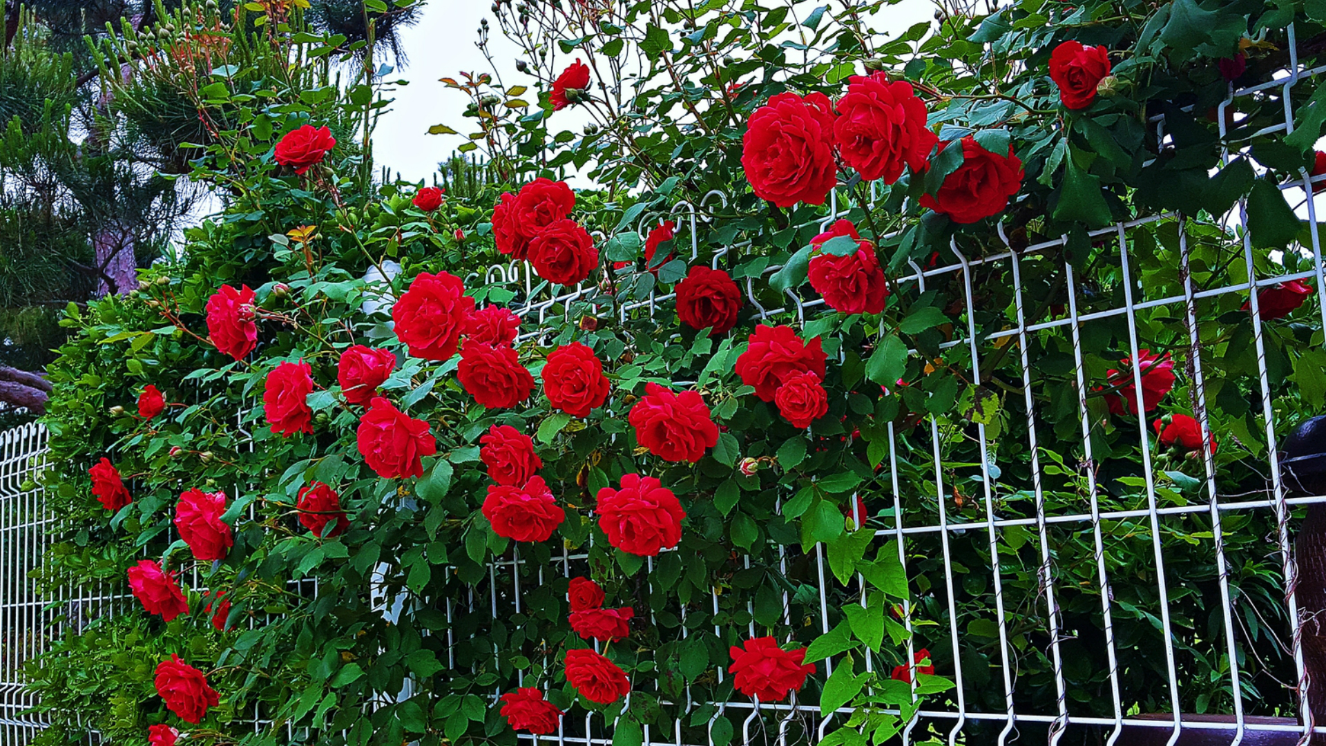 Zaun aus Metall verzinkt - Ampanel.de